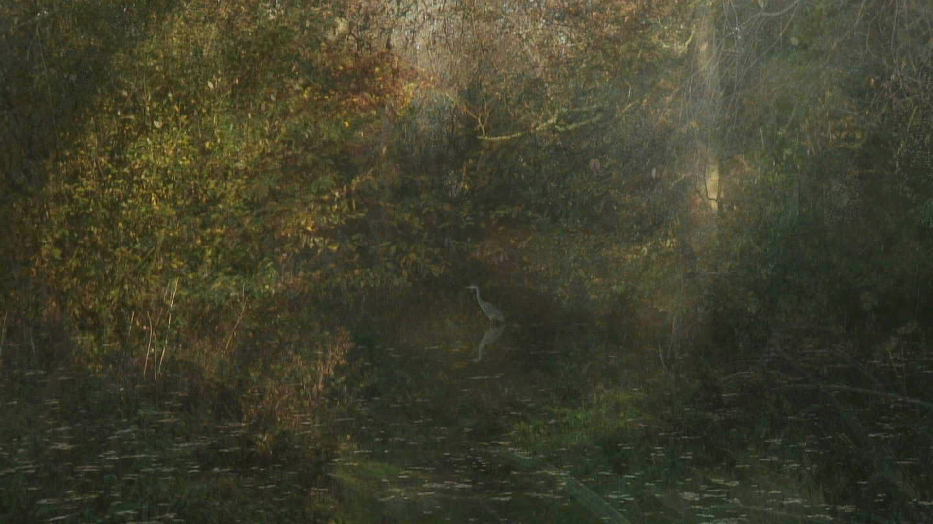 Toby Tatum - The Secluded Grove Film Still